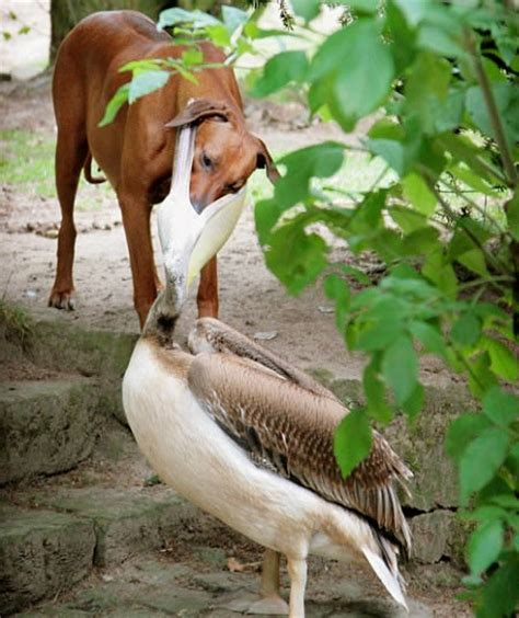 animal fights fights  animals