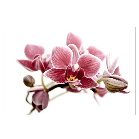 Wild Orchid Home Decor by Gousicteco Orchid Art Images