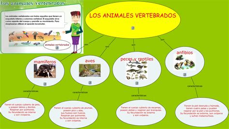 los animales vertebrados los animales vertebrados animales vertebrados