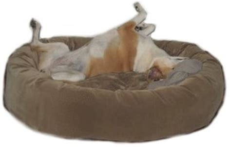 mammoth dog beds vet recommended orthopedic memory foam dog beds by mammoth