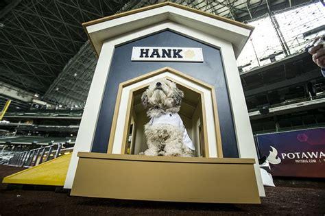 dog house milwaukee 89 best hank the dog images on pinterest