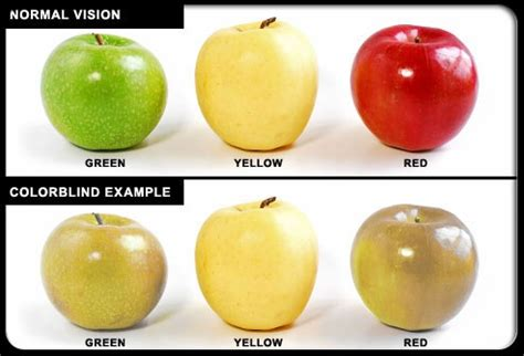 what does color blindness look like color blindness color blindness usually does not mean