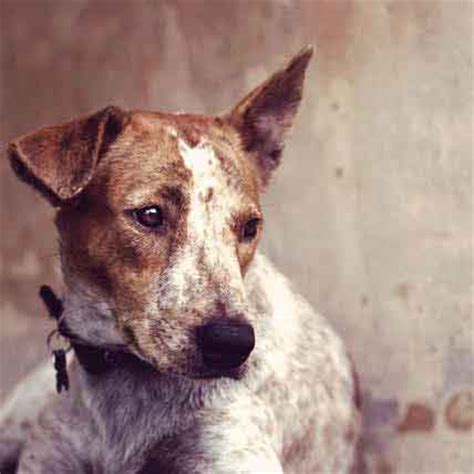 neurological problems in dogs neurological disorders and brain health petcarerx