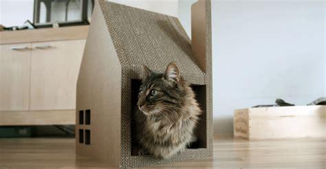 nieuwe kat in huis kat in huis