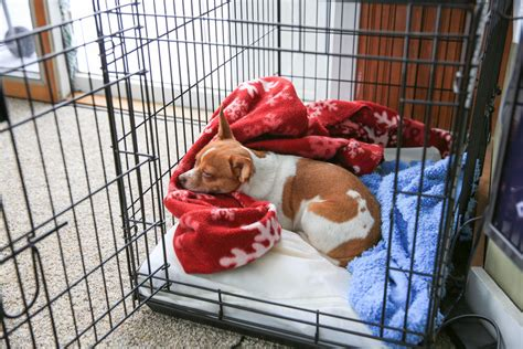 how to get puppy to sleep in crate how to your human for dogs crates cell or cozy home trudog 174