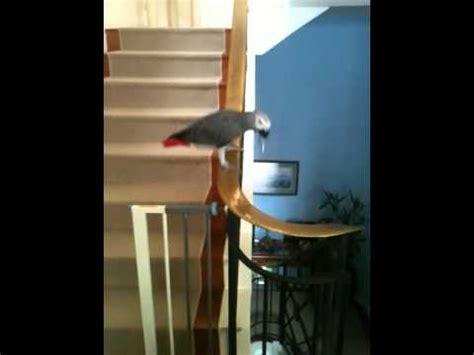 Sliding A Banister by Parrot Slides Banister