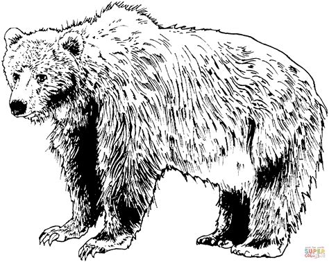 brown bear coloring page free printable coloring pages