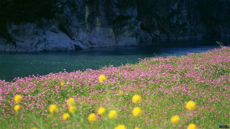free wallpaper early spring download wallpaper early spring flowers 1366 x 768