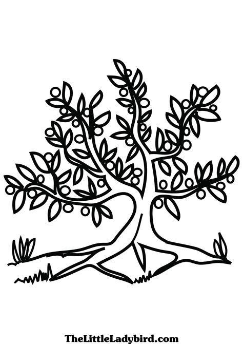 free olive tree coloring page thelittleladybird com