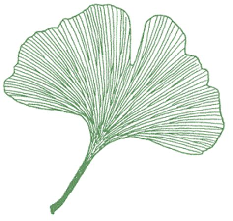 quia leaf id the basics