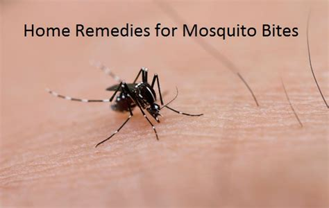 Home Remedy For Mosquitoes by Home Remedies For Mosquito Bites Treatment