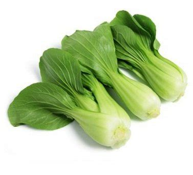Benih Sawi Pakcoy Agrophoria jual beli benih pakcoy baru jual beli aneka produk