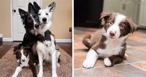 how can dogs hold their hugging dogs can t hold their excitement about meeting their new baby