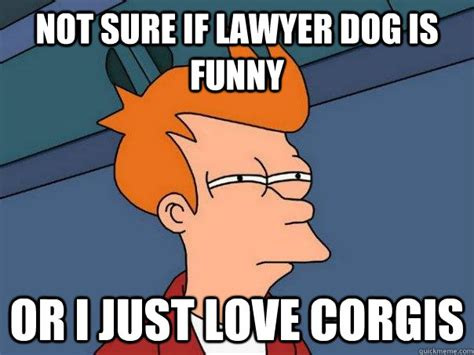 Not Sure Fry Meme - not sure if lawyer dog is funny or i just love corgis
