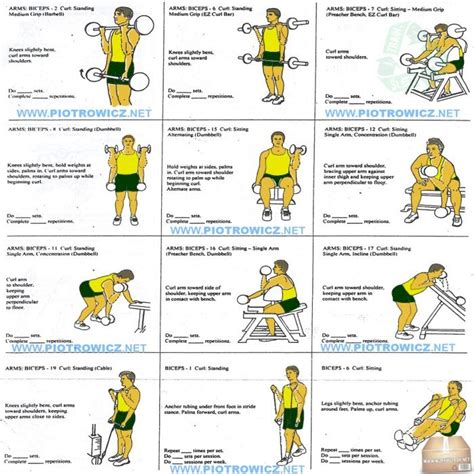 best exercises for big biceps best biceps workout for best biceps exercises workout plan for a big strong