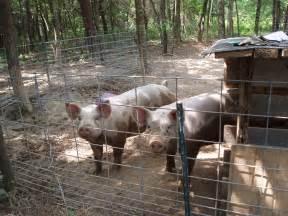Show Pig Barn Designs Ohiofarmgirl S Adventures In The Good Land How To Grow