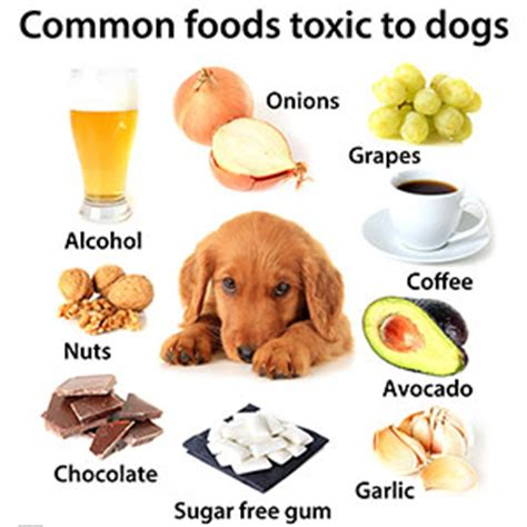 are raisins for dogs perth vet emergency pet care news