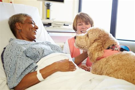 alliance of therapy dogs what is the difference between a therapy vs a service alliance of therapy