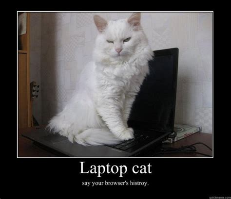 Cat Laptop Meme - laptop cat say your browsers histroy lolcat