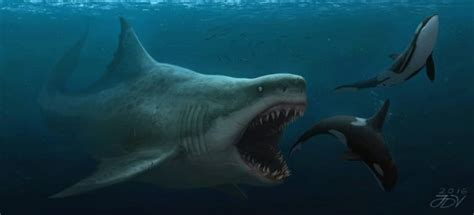 megalodon overestimated would the one of the largest megalodon be able to take