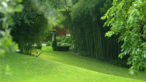 semi erba giardino come scegliere i semi per il prato vostro giardino