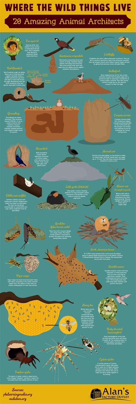 libro infographics animal kingdom 135 best pets animals infographics images on info graphics infographic and