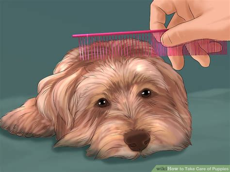 how to take care of puppies how to take care of puppies with pictures wikihow