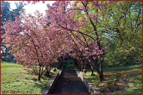 i giardini di marzo lucio battisti i giardini di marzo si vestono di nuovi colori