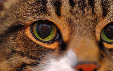 cat eye cat eye
