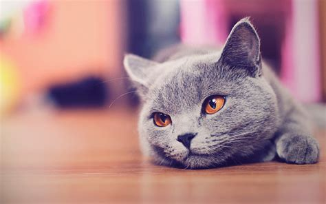 hd wallpaper of cat for mobile cute cat wallpaper hd by alexandruiuilian on deviantart