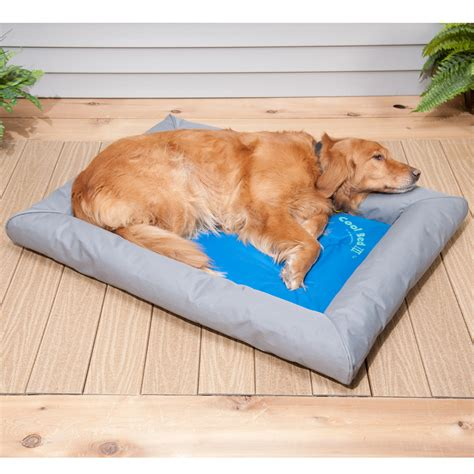 cooling dog bed cool beds for dogs www pixshark com images galleries