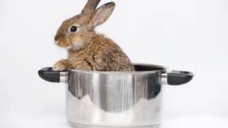 how to cook an easter bunny fox news