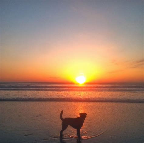 Mily Outer 17 best images about dogs at sunset on