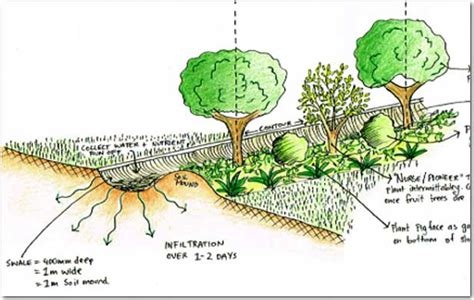 Earth Berm Home Plans swale pathways tasmania australia