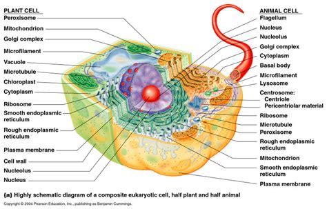 shanfred biochem