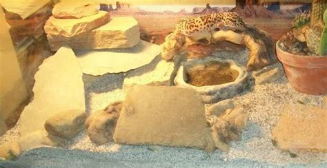 Home Decors Pictures by Basic Leopard Gecko Vivarium Decors And Supplies Leopard