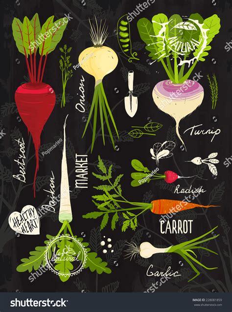 root vegetables leafy tops set design stock vector