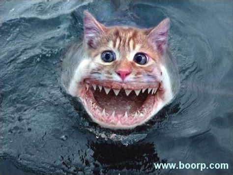 cucinare pesce gatto pesce gatto 171 4live it