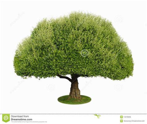 een dierenspeciaalzaak met een u een boom met een wit 2 stock afbeelding afbeelding