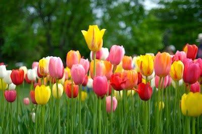 Beli Bibit Bunga Tulip an emphatic umph what is an argument