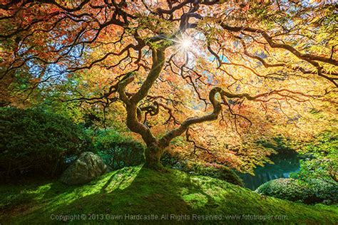 tree photography 4 tips for taking better photographs of trees