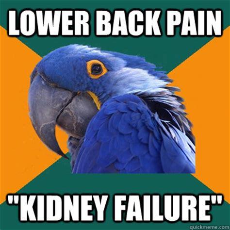 Back Pain Meme - lower back pain kidney failure paranoid parrot