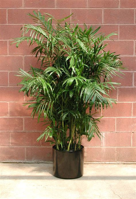 foliage of plants interior landscaping plant rental foliage plants