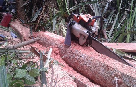 Gergaji Mesin Penebang Pohon perwaku inilah bukti kerusakan hutan di riau