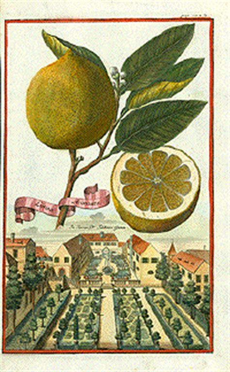 antique prints  citrus fruits lemons oranges