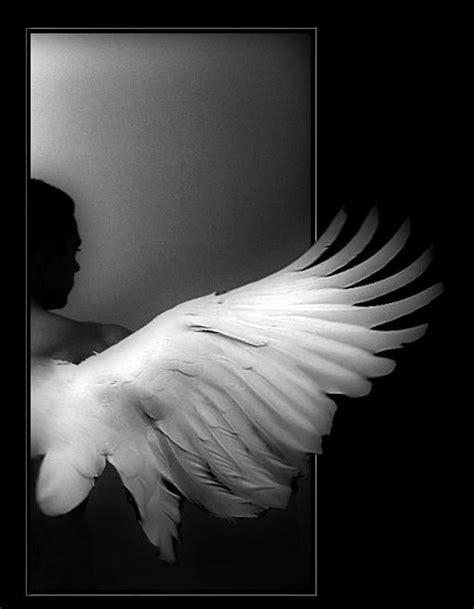 imagenes de alas blancas pedacitos sin papel alas de 225 ngel