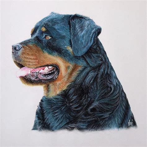 rottweiler drawings rottweiler graphic drawing images