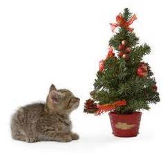 1000 images about cat proofing the christmas tree on