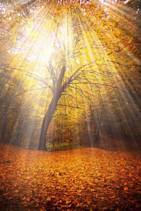 giardino dei cedri festa d autunno giardino dei cedri associazione
