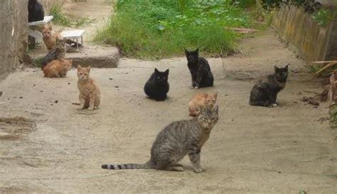 veleno per gatti fatto in casa strage di gatti a gaeta avvelenati forse con stricnina